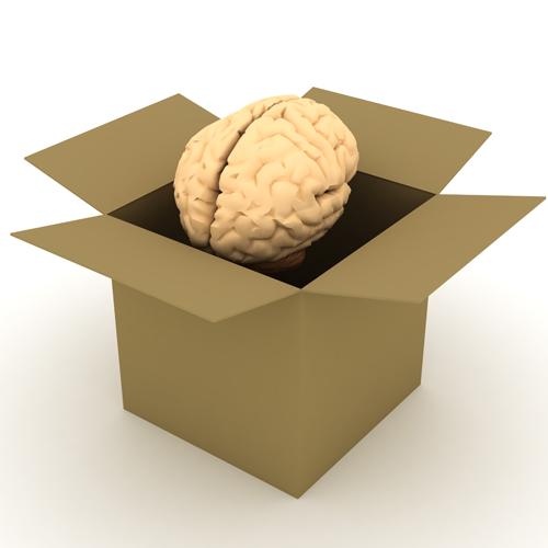 hjärna i box